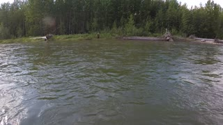 Grizzly Bear Encounter on SUP