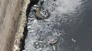Scary water lizard in the canals of Bangkok - Video