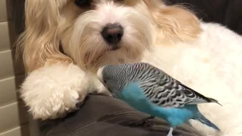 Parrot Beatboxes To Doggy Best Friend