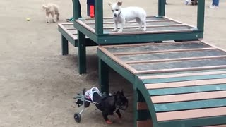 This Pup Is Totally Paw-some - Video