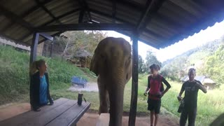 Playing around with a playful young Elephant