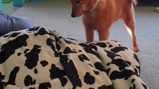 Puppy discovers bean bag, delivers epic reaction