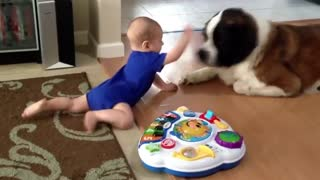 Baby Playing With Huge Dog
