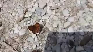 interesting colorful butterflies - Video
