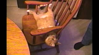 Properly Trained Orange Cat Somersaults Into Chair On Command