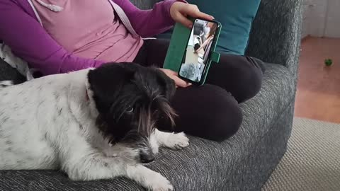 Dog watches herself on the phone