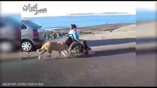 Dog helps push his disabled owner in his wheelchair - Video