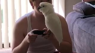 Cockatoo humorously sings along with owner