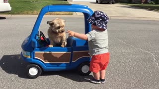 Toddler pushes dog in his toy car - Video
