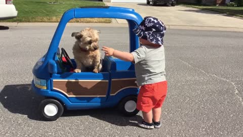 Toddler pushes dog in his toy car
