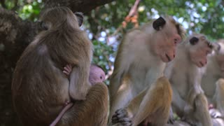 Baby monkey and the mother playing