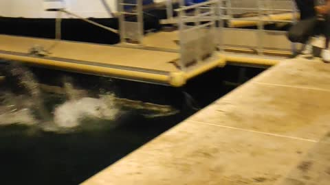 Late Night Ferry Jump Fail