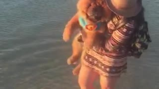 Brown dog getting lifted by girl in water - Video