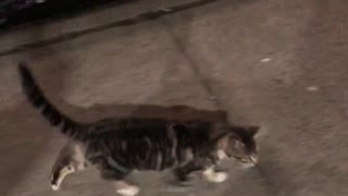 Extremely friendly street cat looks for new home - Video