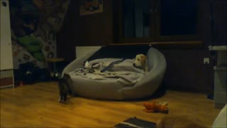 Dog and cat adorably battle for spot on the couch - Video