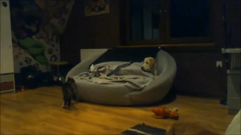 Dog and cat adorably battle for spot on the couch