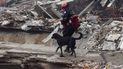 Remembering The Heroic Guide Dogs Of 9/11