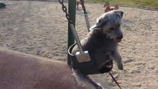 Dog has the time of her life on park swing - Video