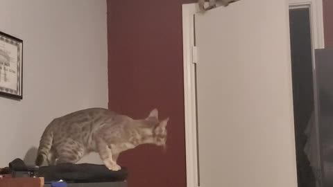 Kitty Climbs Door to Chase Moth