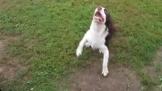 Blind dog plays fetch - Video