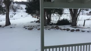 Three Mountain Lions Walk Up To Our Front Door - Video