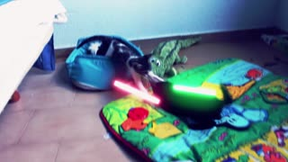 Jedi kittens face off in epic lightsaber battle - Video