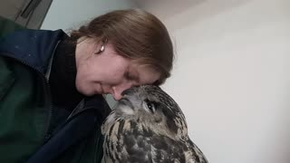 Owl Kisses - Video