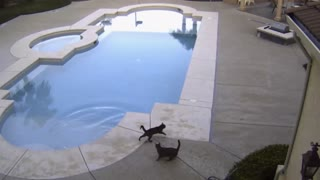 Ninja Cat Scares Brother Into A Pool - Video