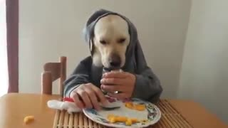 Funniest video in the world, cutest dog ever <3 - Video