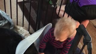 German Shepherd gets Sympathy from Baby  - Video
