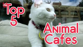 Top 5 Animal Cafes - Video