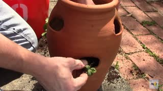 How To Plant Vertical Strawberry Planter - Video