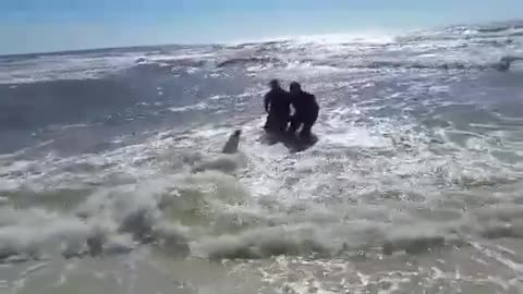 Two surf fishermen save MASSIVE dusky shark!!!