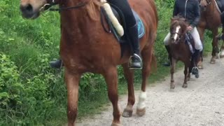 Big horse, Small Horse - Video