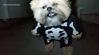 Munchkin the Teddy Bear's skeleton costume - Video