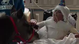 Miniature Horse Celebrates His 25th Birthday At The Akron Childrens Hospital - Video