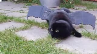 Cat with funny face models dragon costume - Video