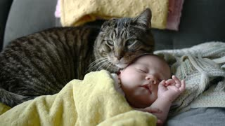A newborn baby is introduced to the family cat. What happens next is simply unbelievable! - Video