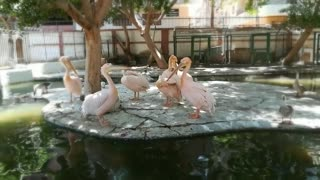 Group Meeting Pink Pelican Family