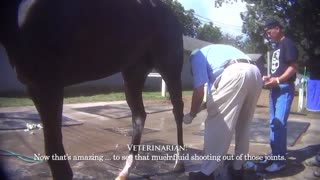 Horse Racing Exposed: Drugs, Deception, and Death - Video