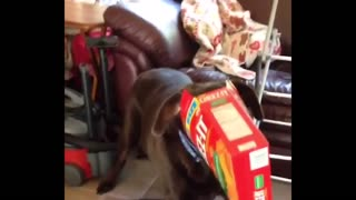 Dog caught with nose in the cheez-it box