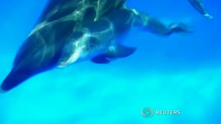 Captive dolphin gives birth - Video