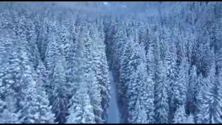 Beautiful forest Drone shot Nature Clips