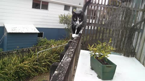 Cute cat walks on patio rail :)