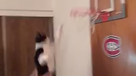 This Sports-Loving Kitty Slam Dunks A Basketball!