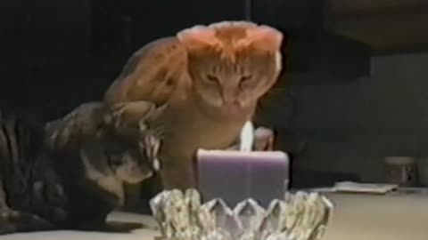 Fearless Cat Puts Out Candle