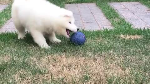 Cute puppy having fun