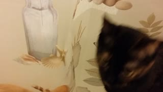Chloe the cat loves shower curtains