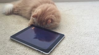 Mr. O'Malley goes fishing on his iPad - Video
