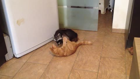 Cat Tries To Steal Food From Raccoon Best Friend